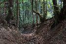 St�ro�n� �vozov� cesta z Drienice na hrebe� Lysej