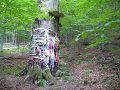 Posvätný buk nad obcou Čirč