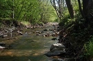 Rieka Topľa v prírodnej rezervácii Livovská jelšina