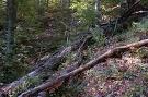 Národná prírodná rezervácia Čergovský Minčol