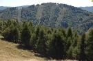 Premenený les vrchu Škaredé