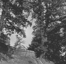 Dub v Hertníku