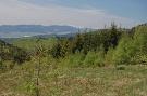 Horská lúka vysadená smrekovcom, v pozadí Tatry
