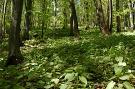 Národná prírodná rezervácia Hradová hora