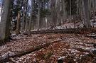 120-ročný les v oblasti Blaňarová