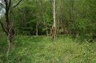 Prírodná rezervácia Livovská jelšina