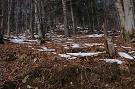 Jedľovo bukový les