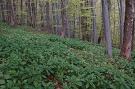 Národná prírodná rezervácia Čergovská javorina