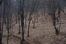 Pohľad do interiéru prírodnej rezervácie Hradová hora