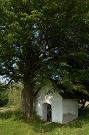 Kaplnka v sedle Priehyby. Lipa s obvodom 3.2 m