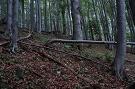 Bukový prales Bukového vrchu