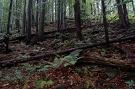 Lesy Hrašovíka